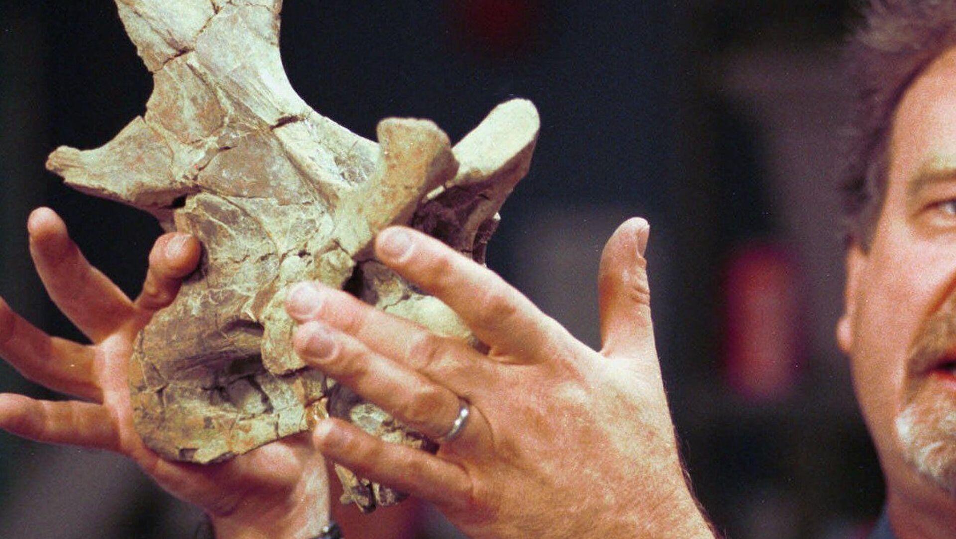 Un hombre sostiene un fosil de la vértebra de un saurópodo (archivo) - Sputnik Mundo, 1920, 19.01.2021