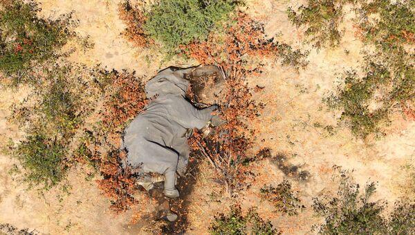 Elefantes muertos en Botsuana - Sputnik Mundo