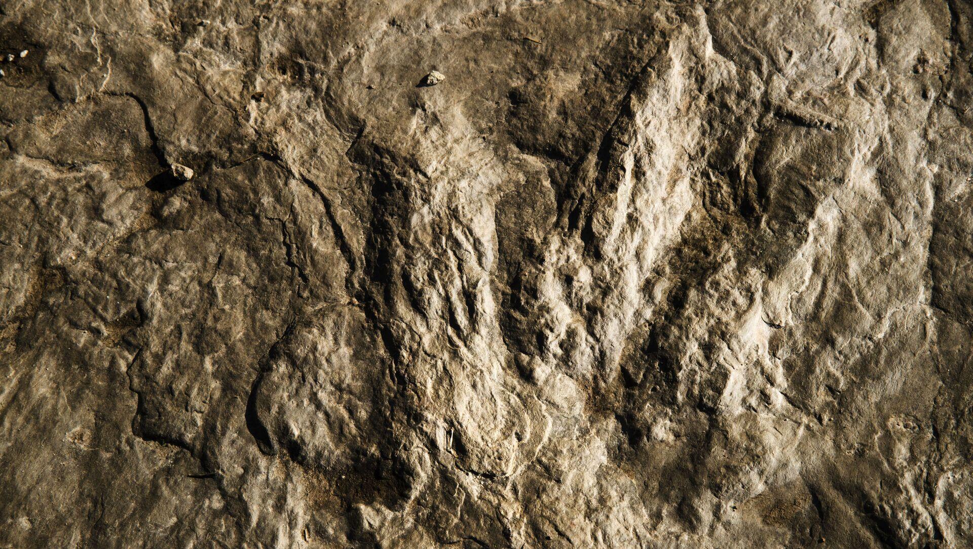 La huella fosilizada de un dinosaurio - Sputnik Mundo, 1920, 31.01.2021