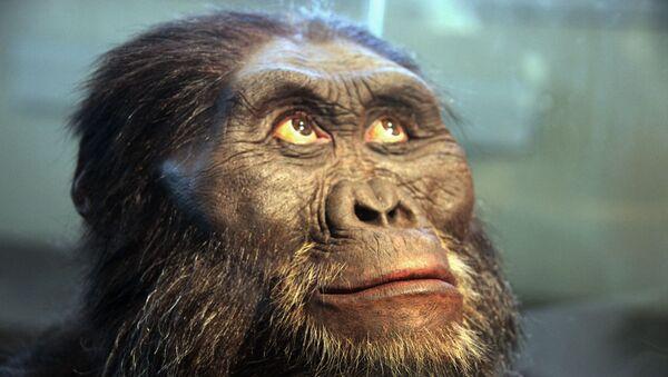 Un modelo de cabeza de un australopitecus afarensis - Sputnik Mundo