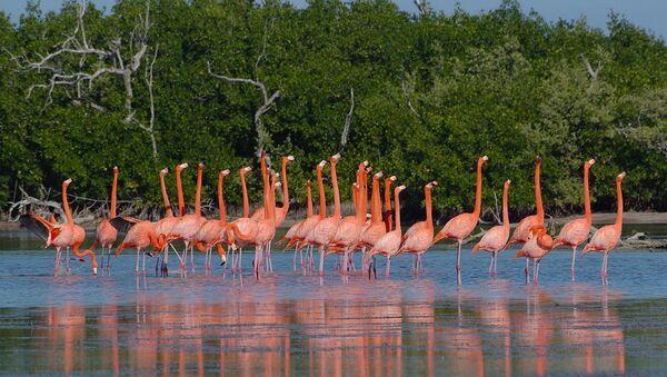 Ría Lagartos, Yucatán, Mexico - Sputnik Mundo