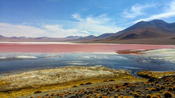 Otro de los primeros humedales incluídos en la lista de Ramsar es Los Lípez, o Laguna Colorada. Un lugar de cría para los flamencos andinos, aves migratorias que se cuentan por miles en las aguas ricas en minerales esparcidas en 60 km² de la Reserva Nacional de Fauna Andina Eduardo Abaroa, en el altiplano potosino de Bolivia. - Sputnik Mundo