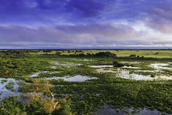 El Pantanal Matogrossense es un parque nacional brasileño situado en el estado Mato Grosso. Con más de 1.356 km², tiene el objetivo de proteger y preservar todo el ecosistema del pantanal, así como su biodiversidad, manteniendo un equilibrio dinámico y la integridad ecológica de los ecosistemas. Además de estar en la lista Ramsar, también es Patrimonio de la Humanidad por la UNESCO. - Sputnik Mundo