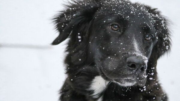 Un perrito en la nieve  - Sputnik Mundo