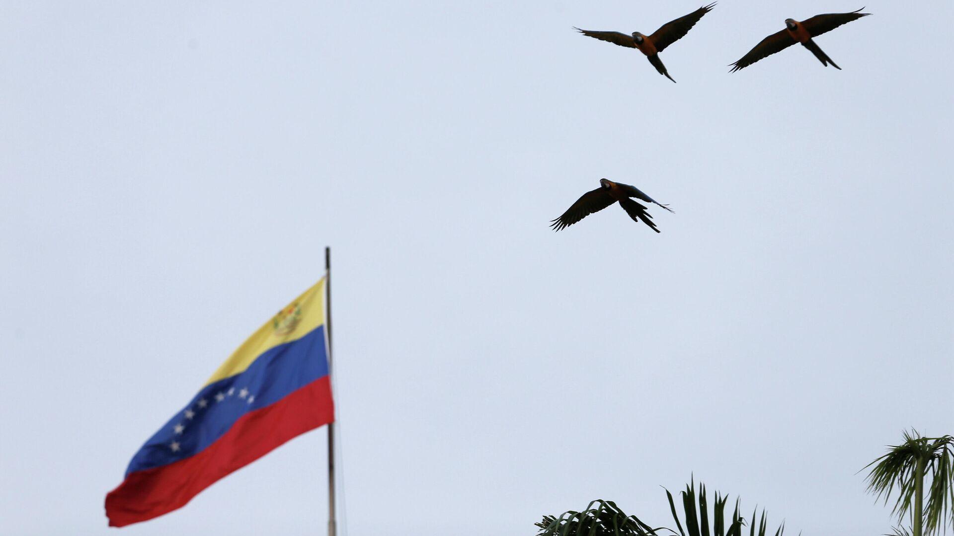La bandera de Venezuela - Sputnik Mundo, 1920, 11.02.2021