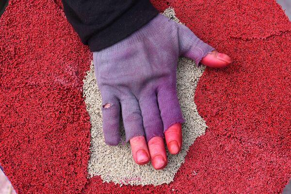 Un obrero vietnamita manipula palitos aromatizantes secos durante los preparativos para las celebraciones del Año Nuevo lunar. - Sputnik Mundo