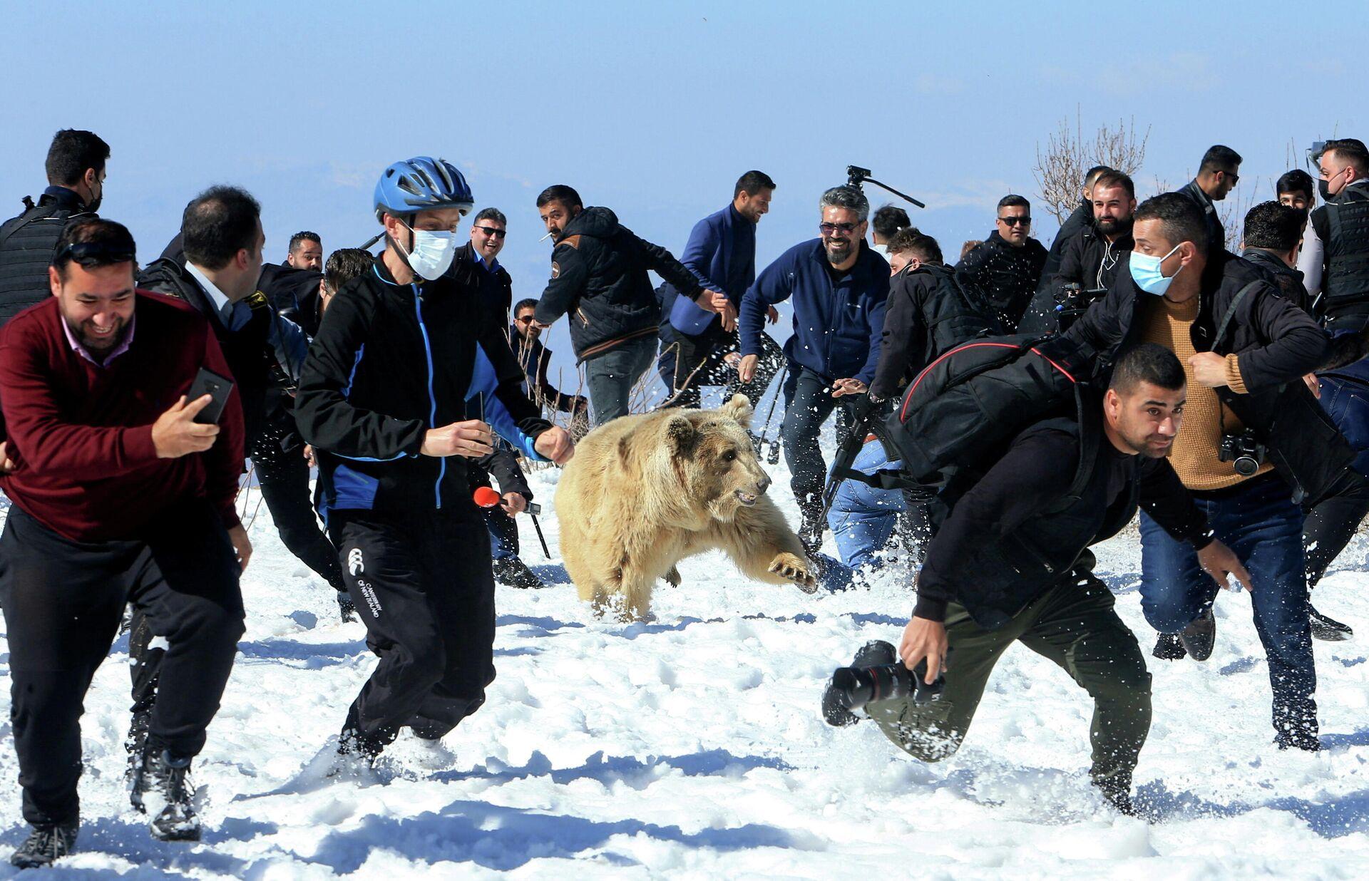 Un osos ataca a los espectadores - Sputnik Mundo, 1920, 13.02.2021