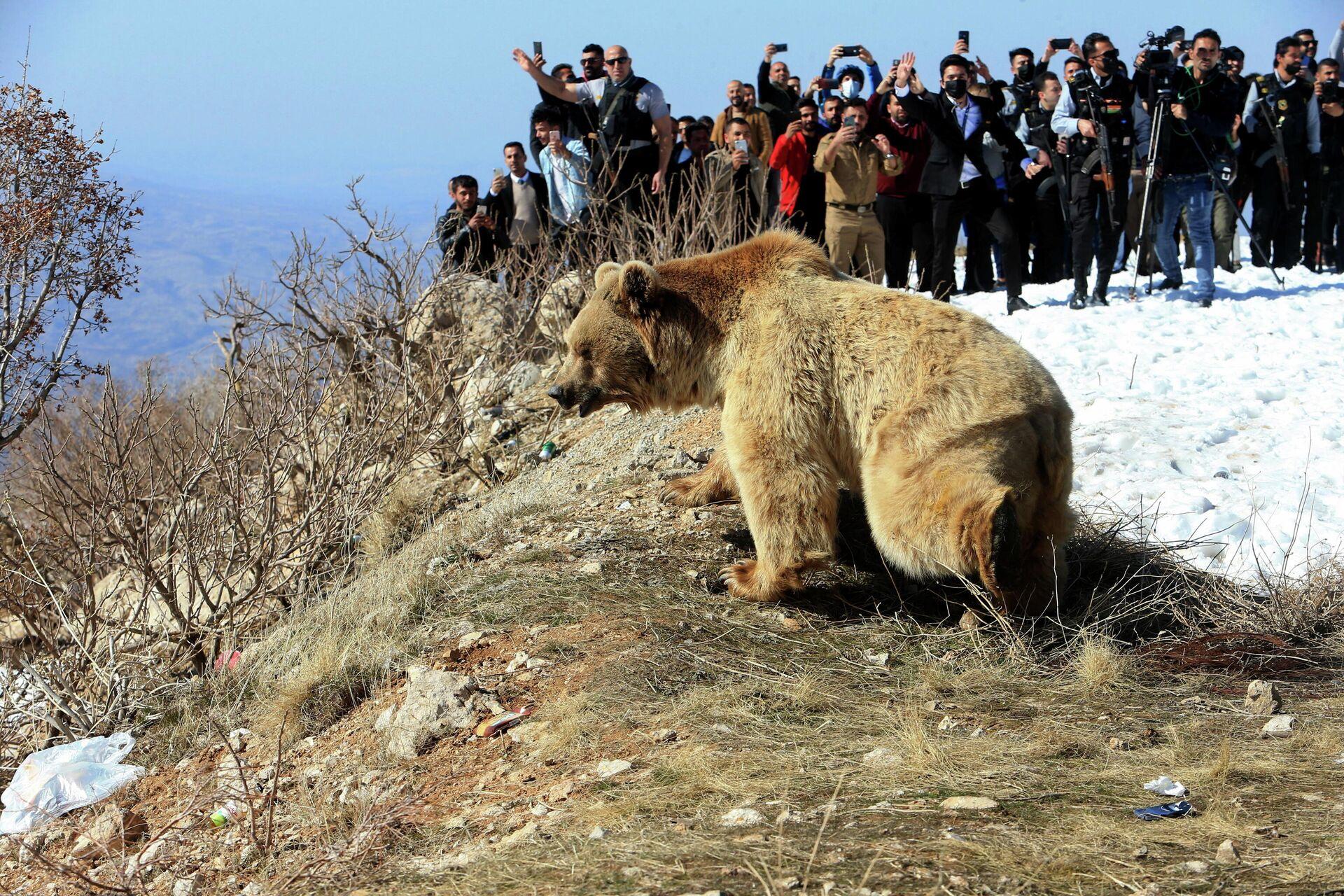 La liberación de los osos en Irak - Sputnik Mundo, 1920, 13.02.2021