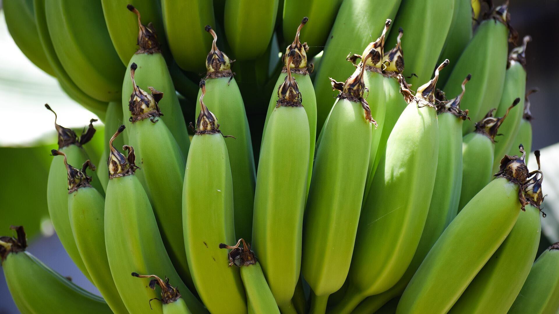 Bananas, plátanos. Imagen referencial - Sputnik Mundo, 1920, 19.02.2021