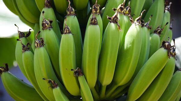 Bananas  - Sputnik Mundo