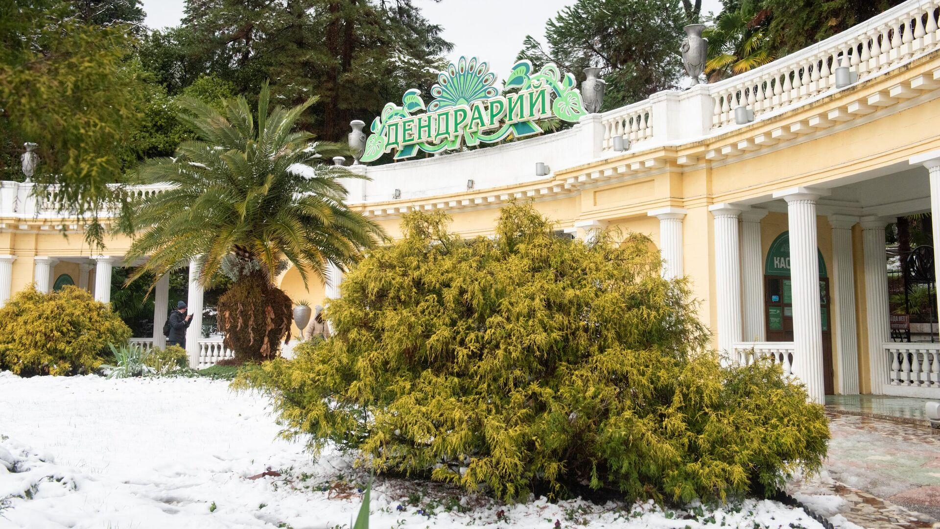 Un parque de Crimea bajo la nieve - Sputnik Mundo, 1920, 20.02.2021