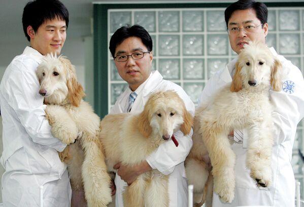 El cachorro de lebrel afgano Snuppy fue el primer perro clonado del mundo. Nació en Corea del Sur en 2005. En 2008, Snuppy participó en la primera cría exitosa conocida de perros clonados, de la que nacieron 10 cachorros. - Sputnik Mundo