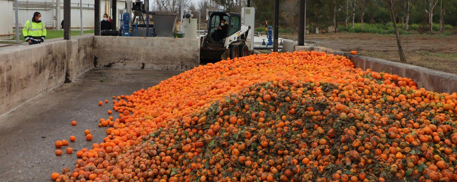 Tratamiento de las naranjas en depuradora - Sputnik Mundo, 1920, 24.02.2021