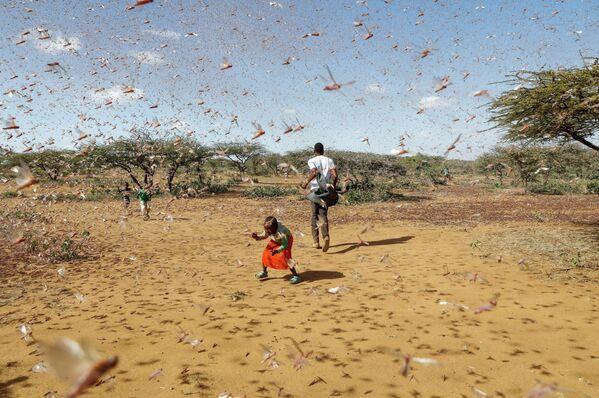 Un niño intenta ahuyentar un enjambre de langostas del desierto en Naiperere, cerca de la ciudad de Rumuruti (Kenia).  - Sputnik Mundo
