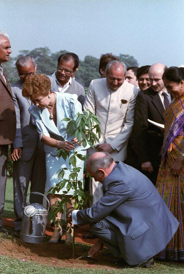 Gorbachov —quien estuvo a la cabeza de la URSS de 1985 a 1991— pasó a la historia como una personalidad que cambió tanto su propio país como el mundo entero. En la foto: Gorbachov planta un arbusto de mandioca junto a su esposa, Raísa, durante una visita oficial a la India, en 1988. - Sputnik Mundo