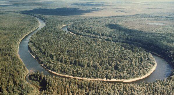 La taiga siberiana, que se extiende a lo largo y ancho de 9.000 kilómetros, es el bosque más grande del mundo y proporciona oxígeno a todo el planeta. - Sputnik Mundo