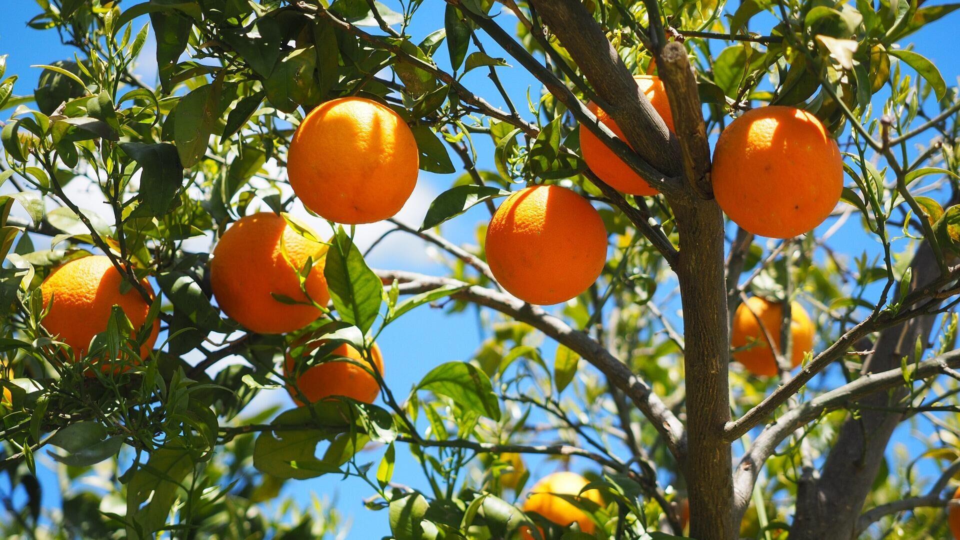 Naranjas - Sputnik Mundo, 1920, 06.03.2021