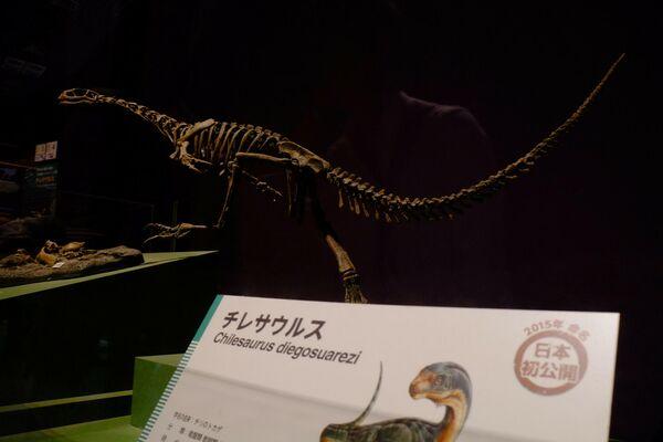 Fósiles del 'Chilesaurus diegosuarezi' - Sputnik Mundo