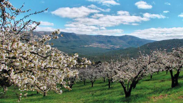 Valle de las Caderechas (Burgos) - Sputnik Mundo