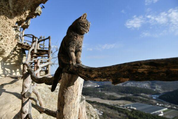 Un gato en el territorio del monasterio rupestre de Chelter-Marmara, en el acantilado del monte Chelter-Kaya, Crimea, Rusia. - Sputnik Mundo