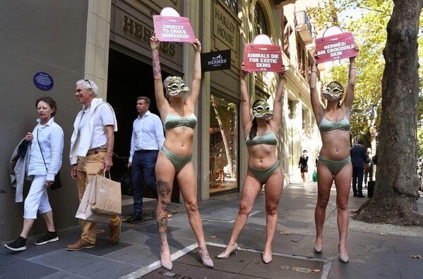 Activistas de la organización Personas por el Trato Ético de los Animales (PETA) frente a la tienda de la marca de moda francesa Hermès en Melbourne, Australia. - Sputnik Mundo