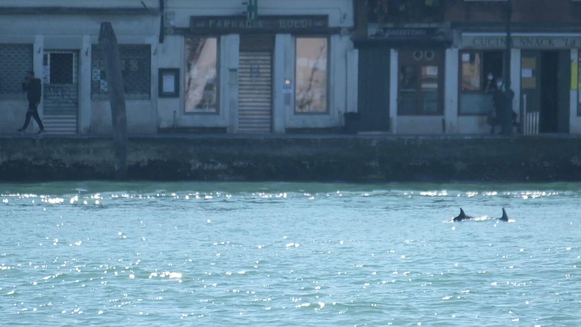 Unos delfines nadan en el canal de Giudecca, cerca de la Plaza de San Marcos, en Venecia (Italia) - Sputnik Mundo, 1920, 25.03.2021