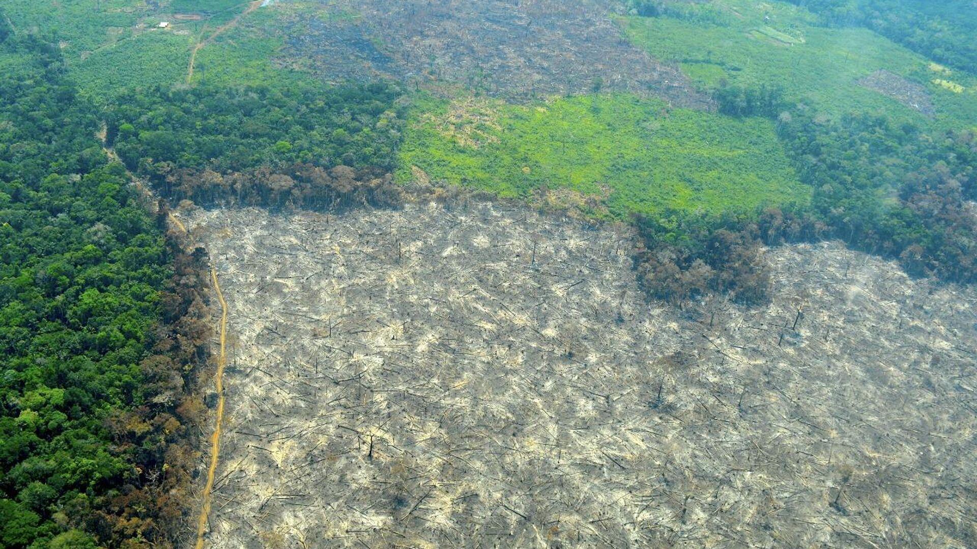 Deforestación en Colombia - Sputnik Mundo, 1920, 26.03.2021