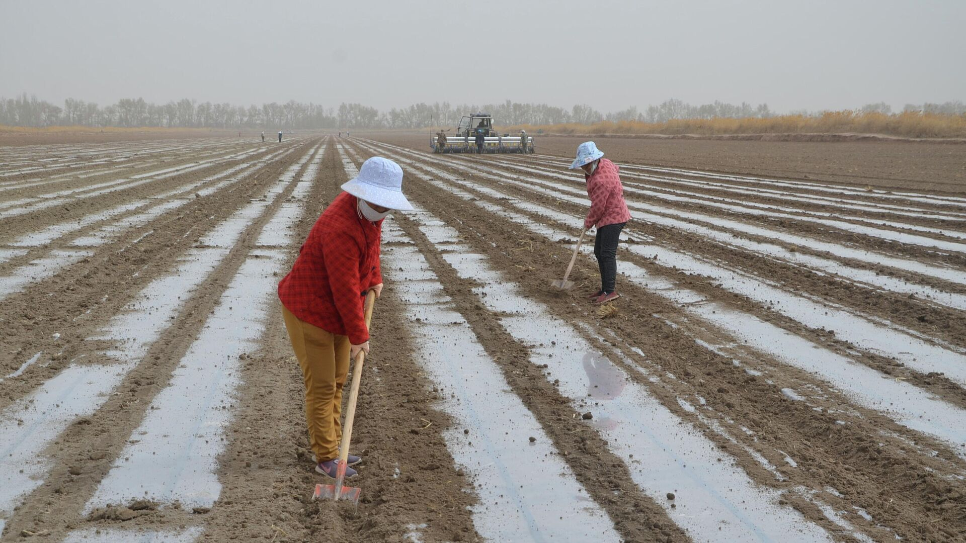 Un cultivo de algodón en Xinjiang - Sputnik Mundo, 1920, 29.03.2021