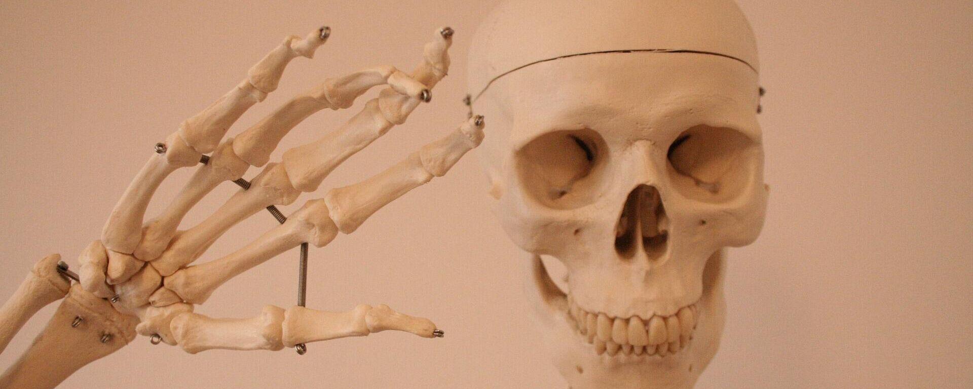Un esqueleto - Sputnik Mundo, 1920, 30.03.2021