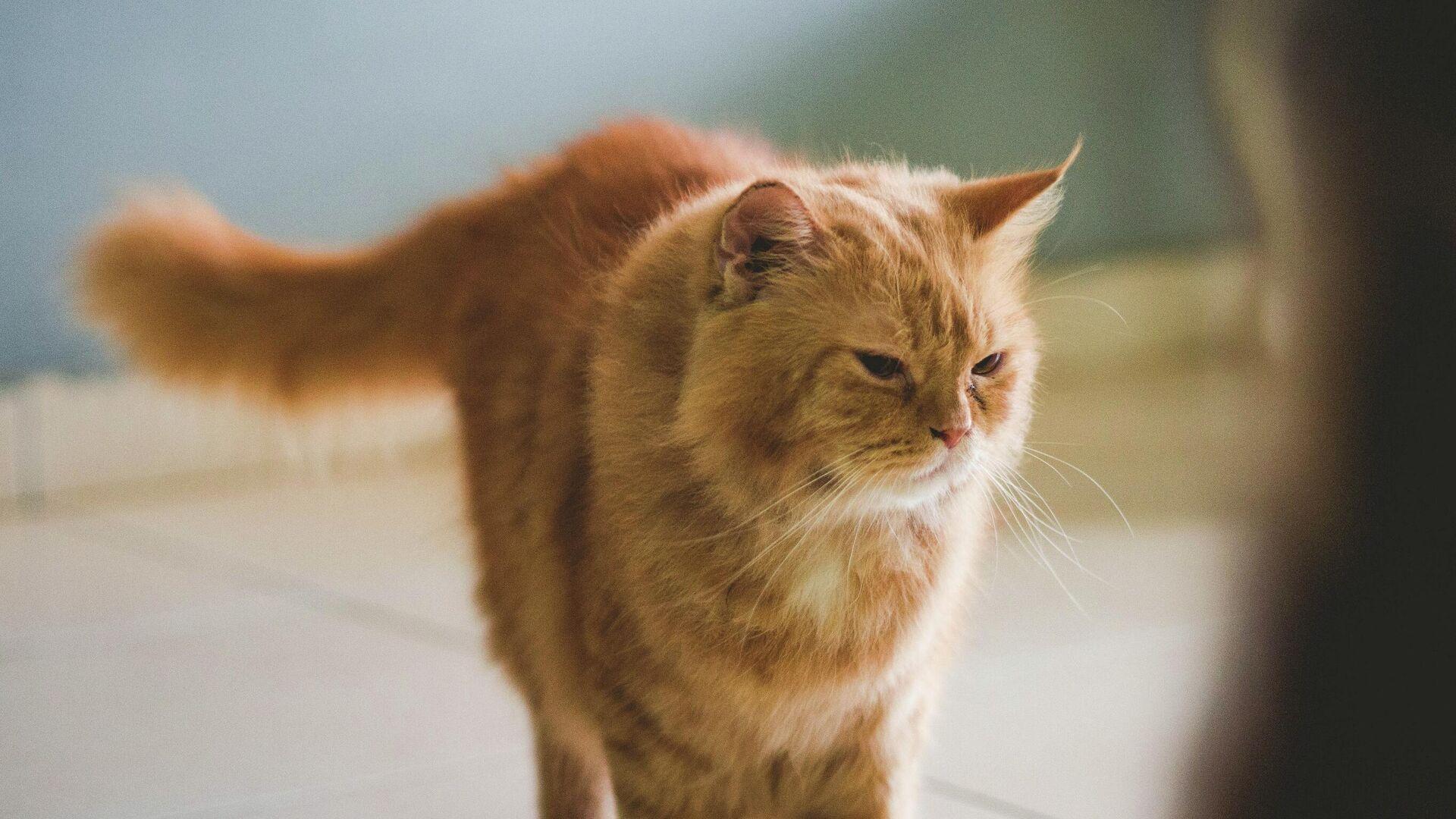 Un gato - Sputnik Mundo, 1920, 31.03.2021