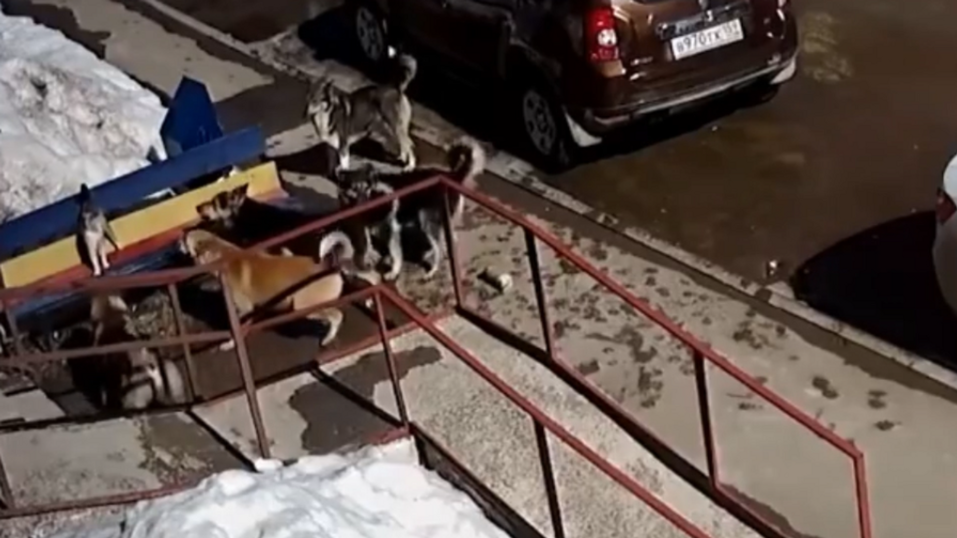Un valiente gato se enfrenta a una jauría de 7 perros callejeros - Sputnik Mundo, 1920, 03.04.2021