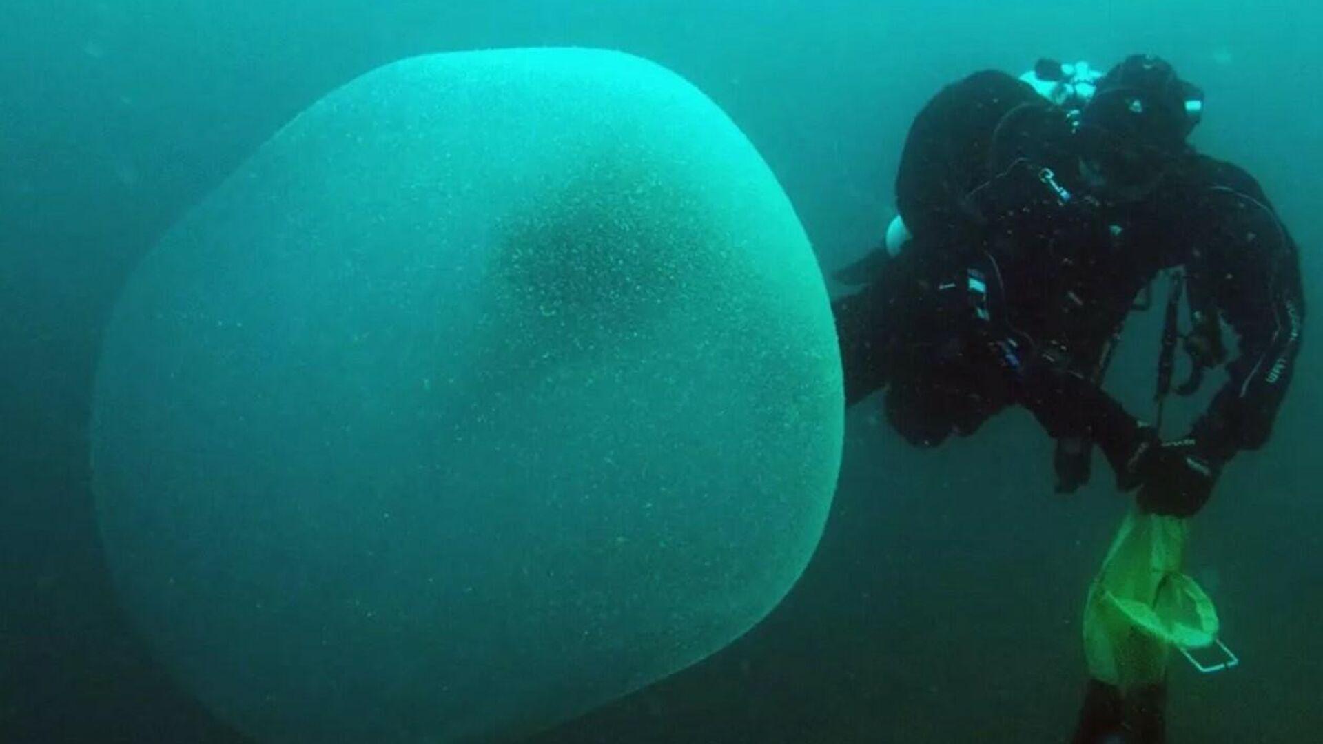 Huevos del calamar Illex Coindetii - Sputnik Mundo, 1920, 04.04.2021