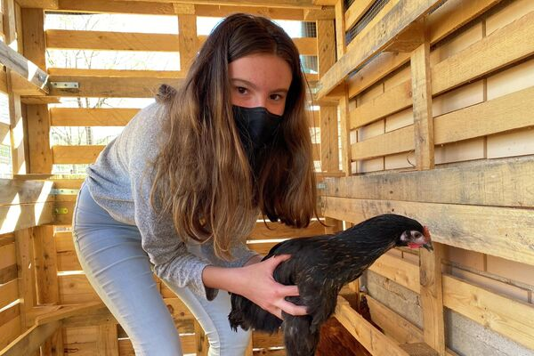Una niña sostiene una gallina en el refugio de animales de su colegio en Sorihuela del Guadalimar, España - Sputnik Mundo