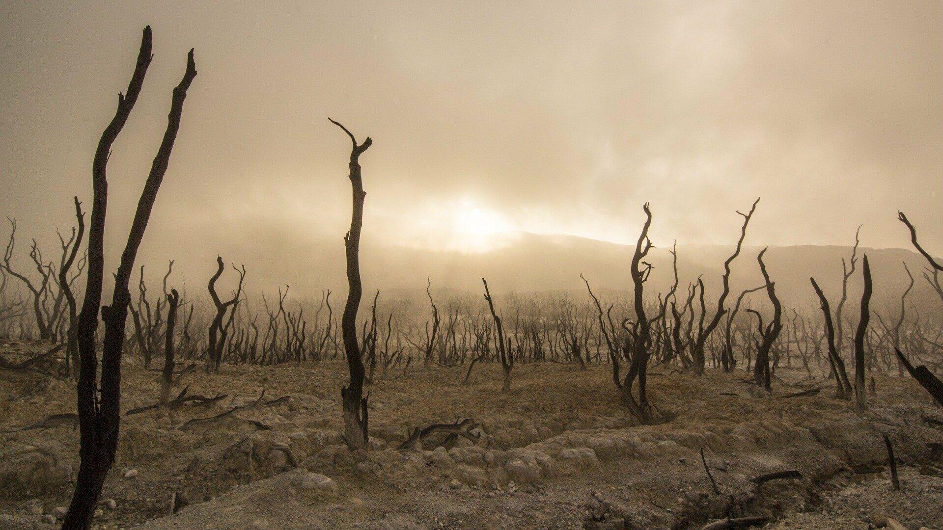 Unos árboles muertos - Sputnik Mundo, 1920, 09.04.2021