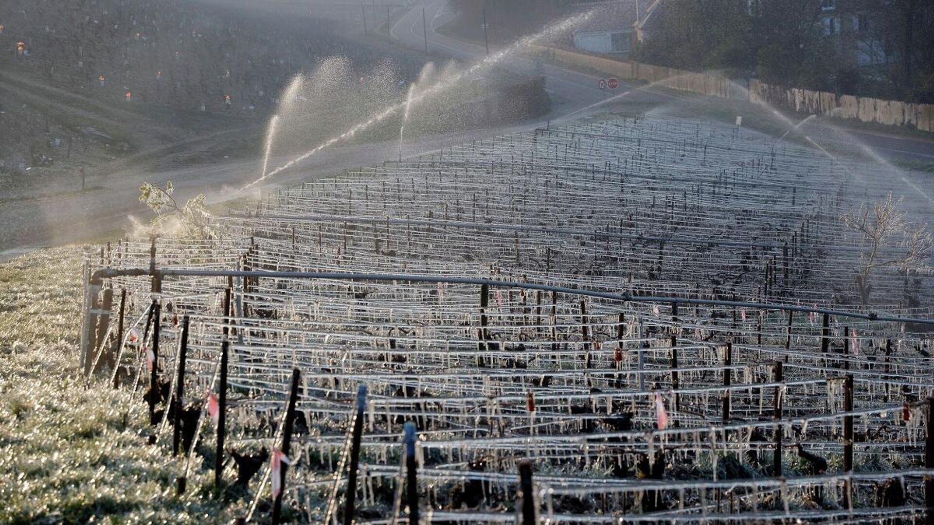 Los agricultores franceses intentan proteger los viñedos de las heladas en los alrededores del municipio de Chablis el 7 de abril de 2021 - Sputnik Mundo, 1920, 11.04.2021