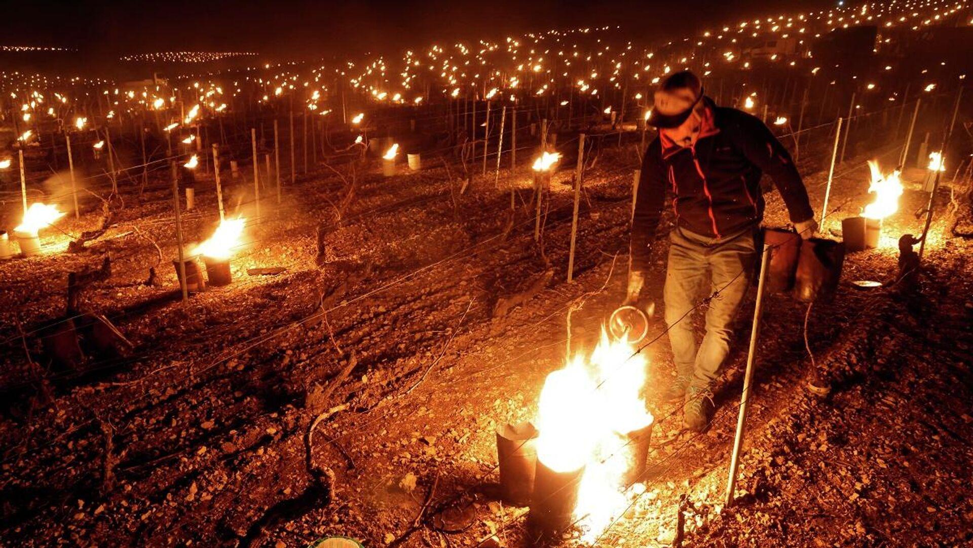 Un viticultor intenta proteger sus viñedos de las heladas en los alrededores del municipio de Chablis, el 7 de abril de 2021 - Sputnik Mundo, 1920, 11.04.2021