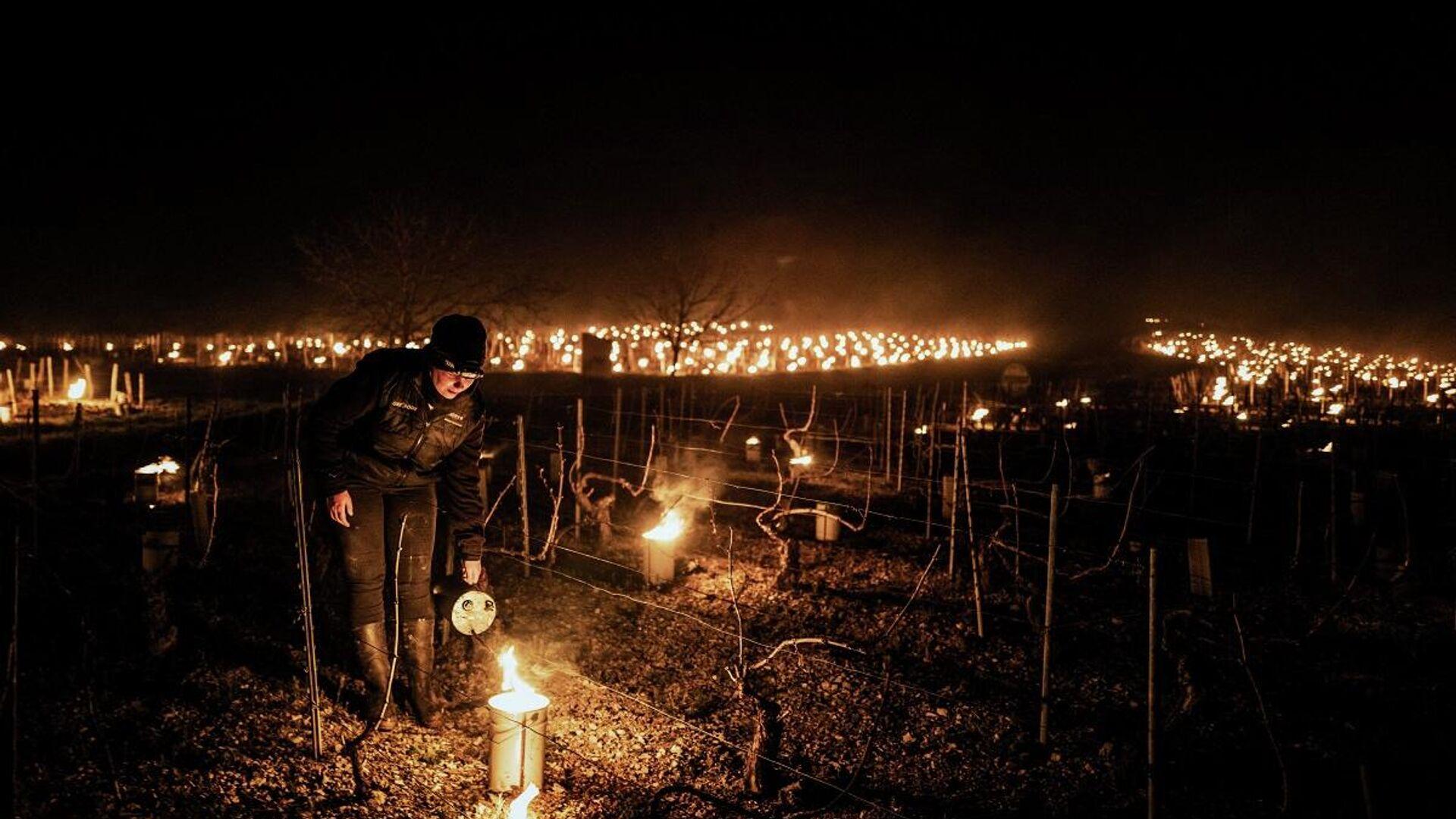 Un viticultor de la bodega Daniel-Etienne Defaix enciende velas anti-heladas en el viñedo cerca del municipio de Chablis (Borgoña) el 7 de abril de 2021 - Sputnik Mundo, 1920, 11.04.2021