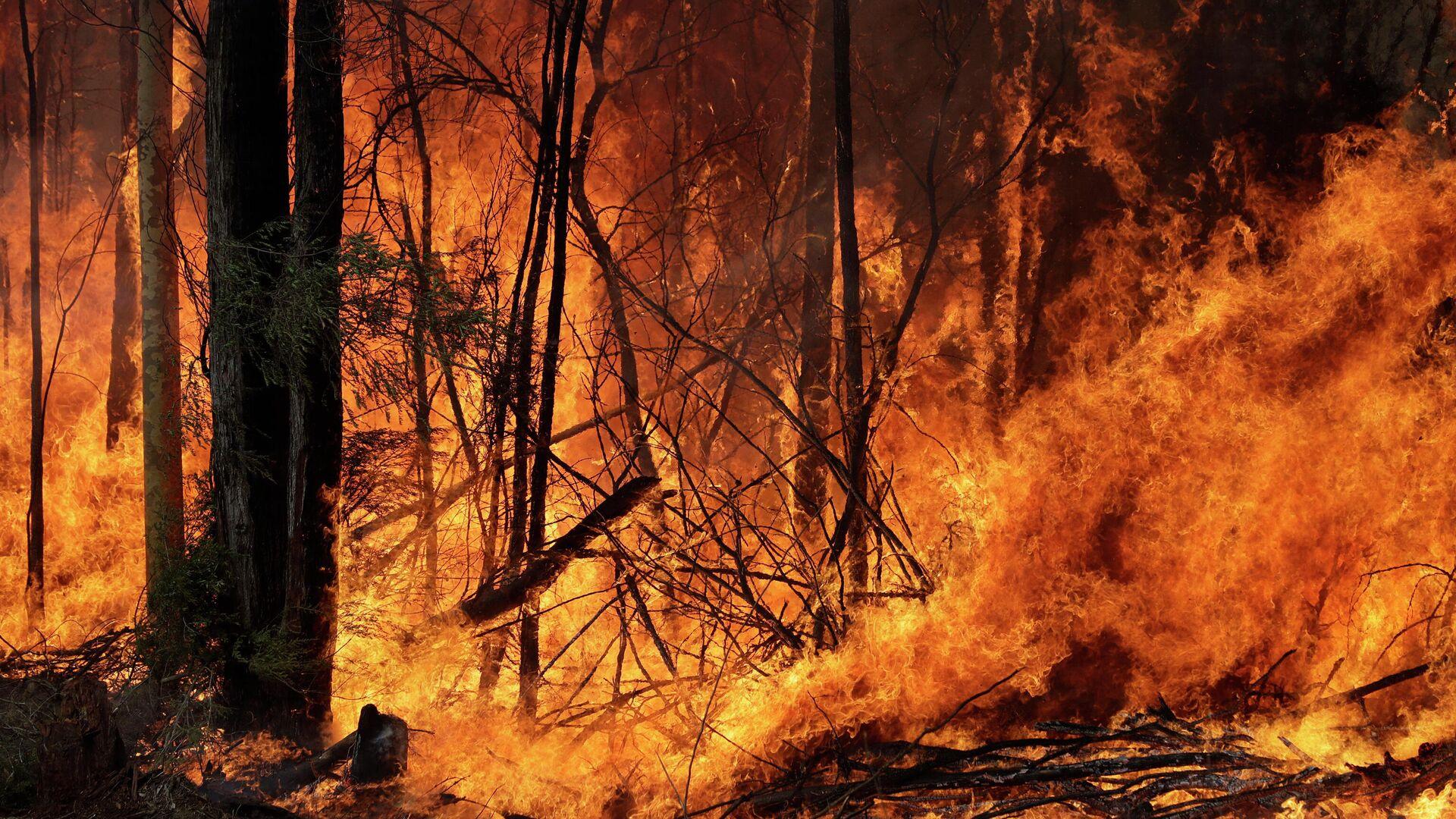 Incendios forestales en Australia - Sputnik Mundo, 1920, 12.04.2021