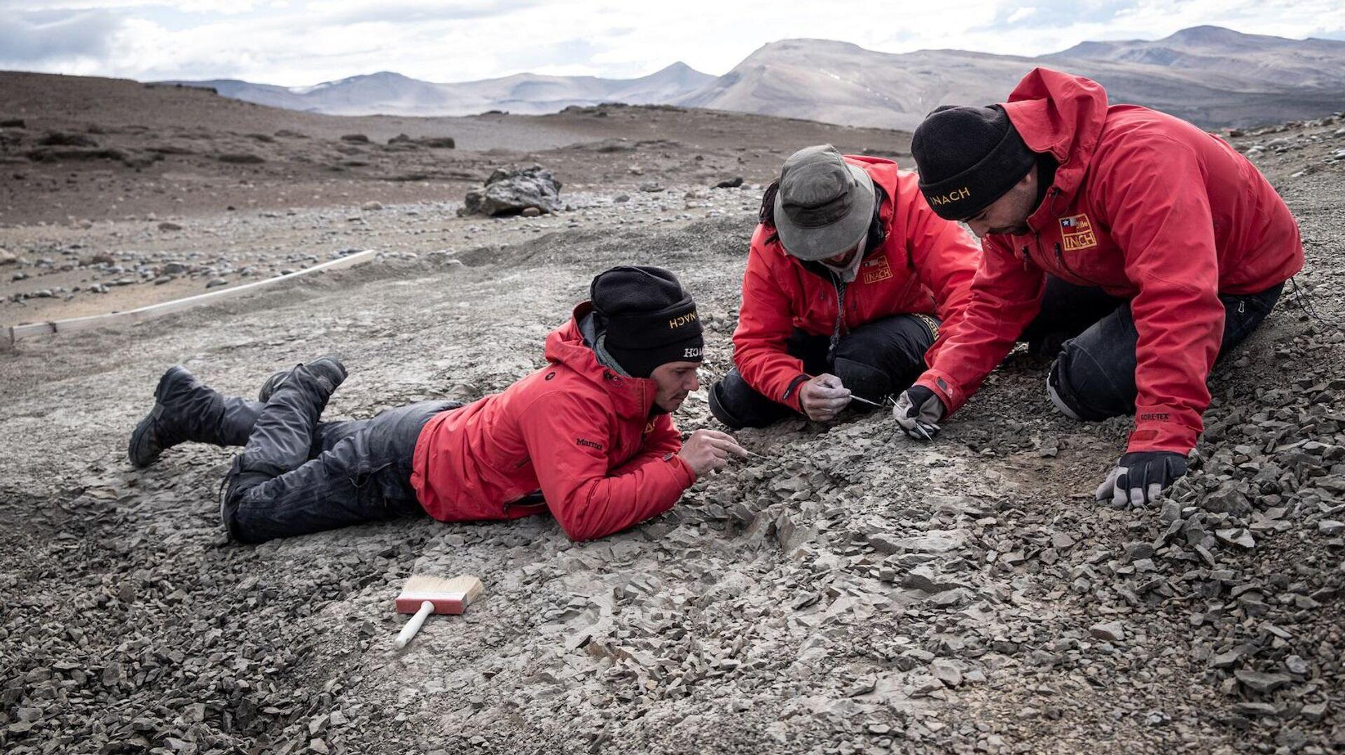 Prospecciones geológicas en Cerro Guido, en el Valle del Río de las Chinas, en Región de Magallanes  - Sputnik Mundo, 1920, 16.04.2021