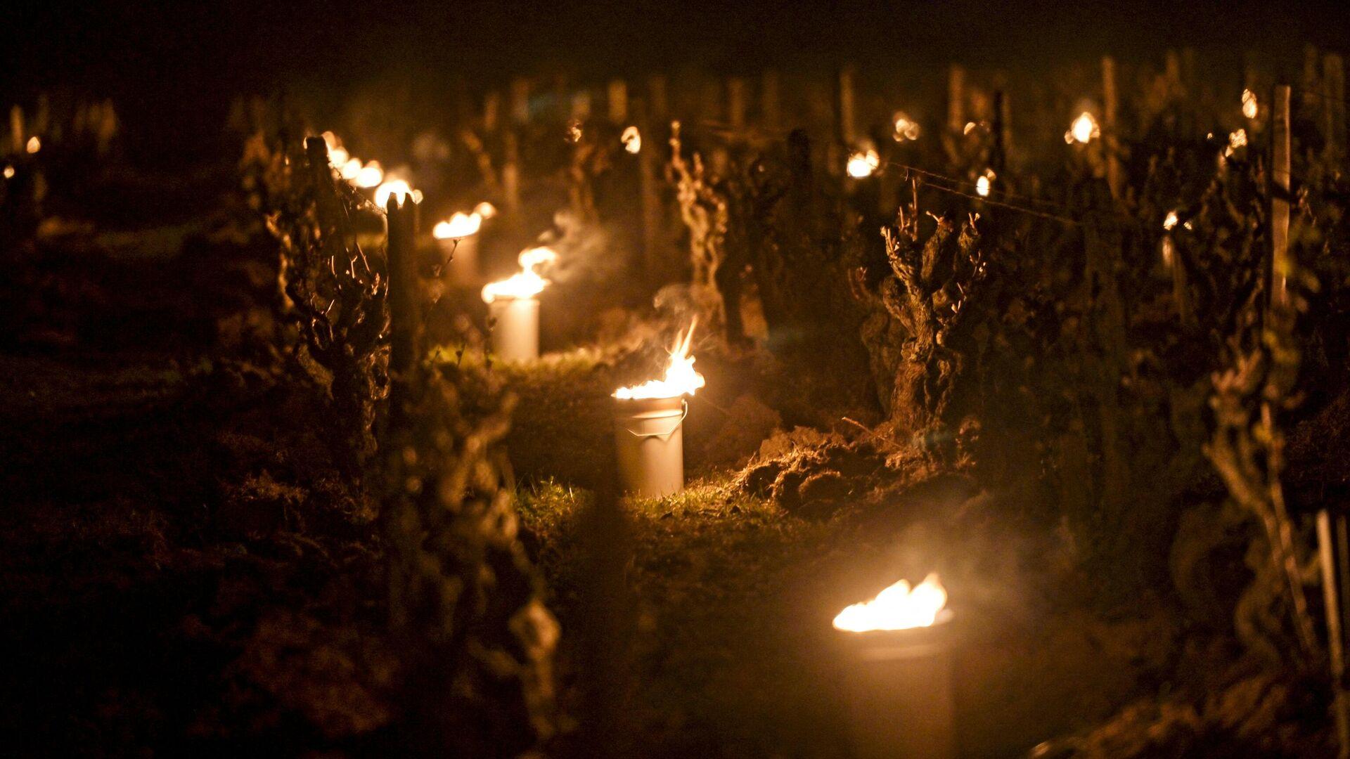 Velas cerca de las viñas de Vouvray (Francia) - Sputnik Mundo, 1920, 21.04.2021