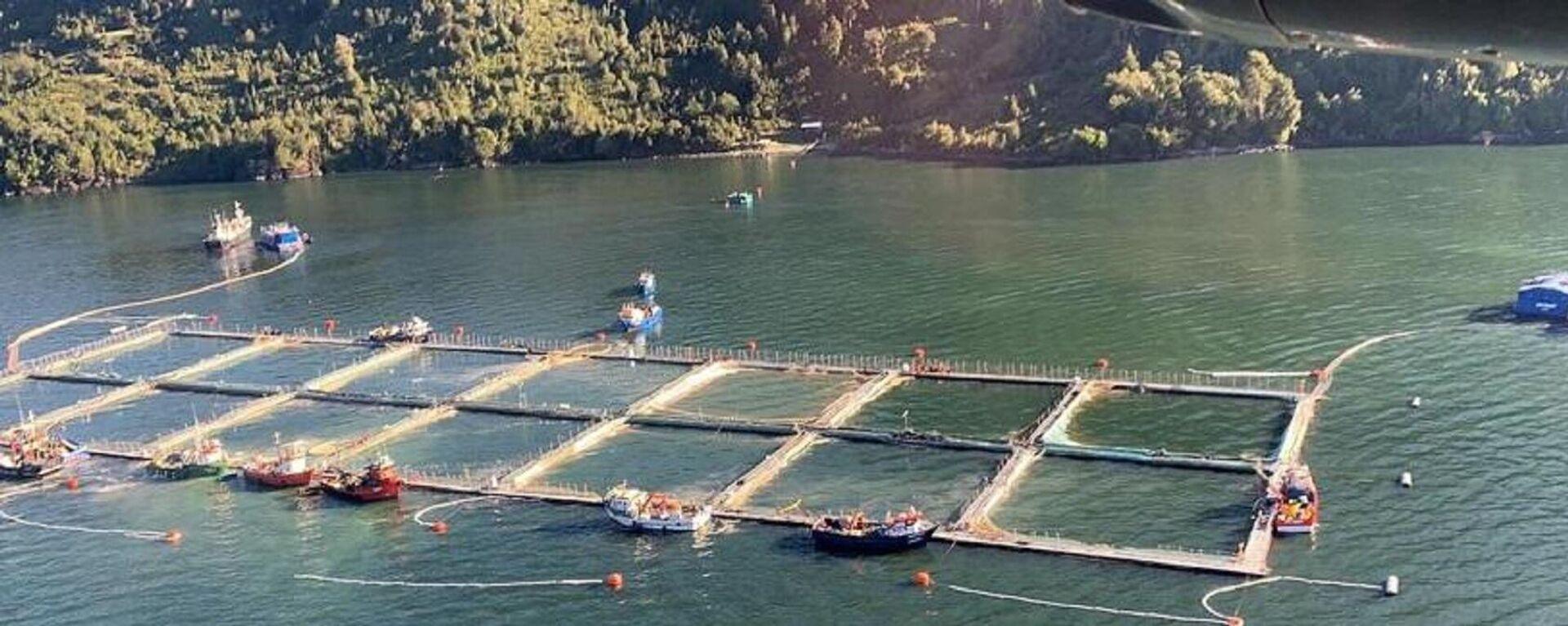 Salmonicultura en el fiordo Comau  - Sputnik Mundo, 1920, 12.07.2021
