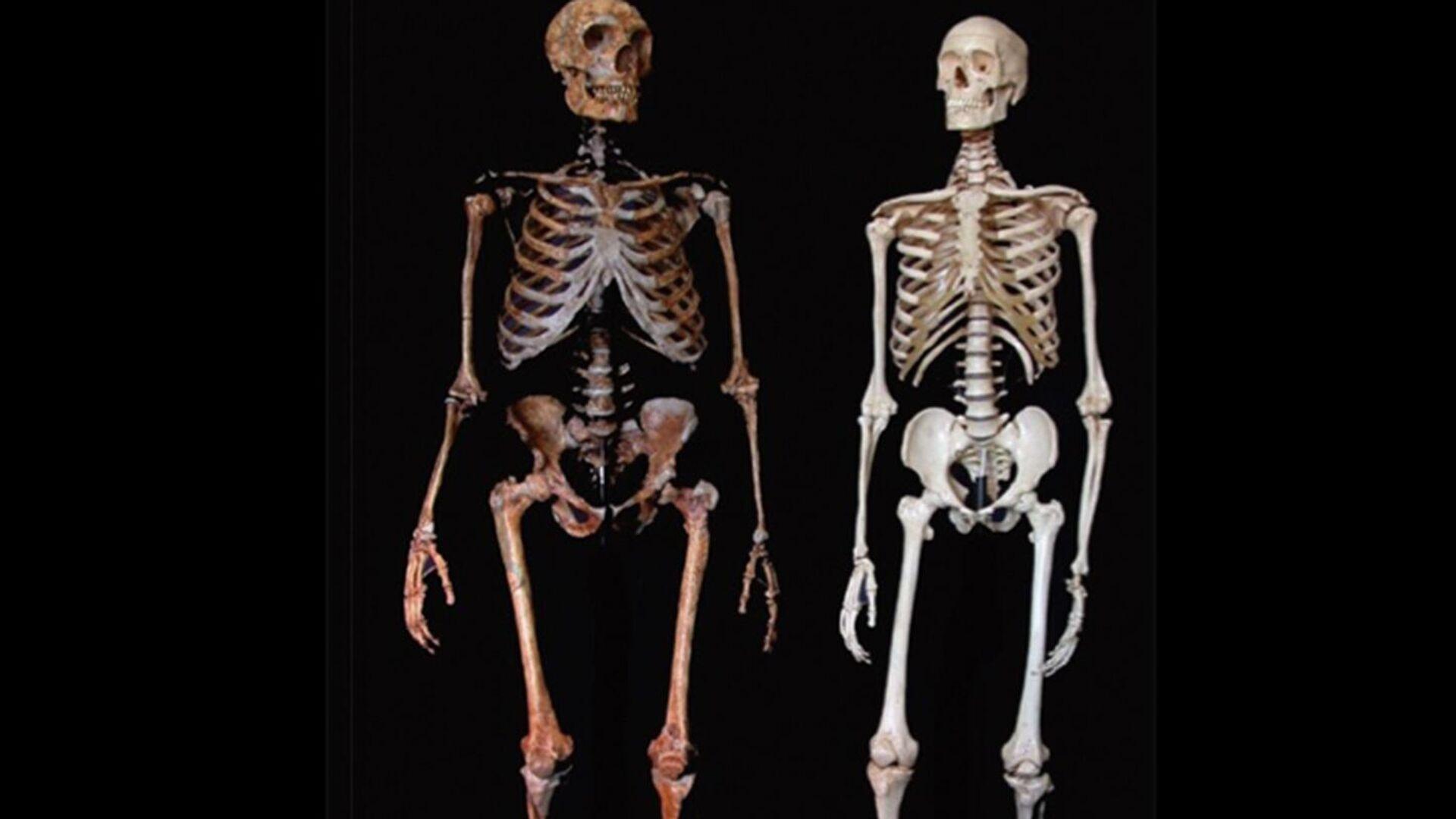 Comparativa de Neandertal y Homo Sapiens - Sputnik Mundo, 1920, 22.04.2021