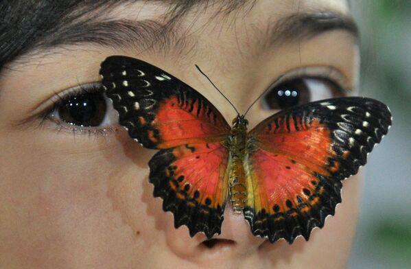 Una mariposa en la cara de una chica en la exposición de mariposas en Biskek, Kuirguistán. - Sputnik Mundo