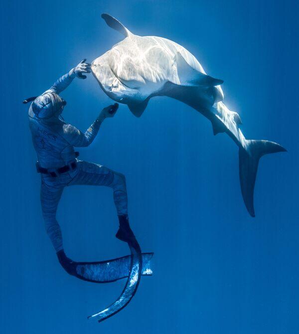 El apneísta francés Pierrick Seybald con un tiburón en las aguas del Océano Pacífico, al norte de Tahití, en la Polinesia Francesa. - Sputnik Mundo