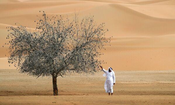 En la Reserva Natural de Um al-Zamool, cerca de la frontera de los Emiratos Árabes Unidos con Arabia Saudí. - Sputnik Mundo