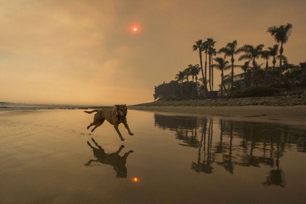 Una playa de California, EEUU, oscurecida por el humo de los incendios forestales. - Sputnik Mundo