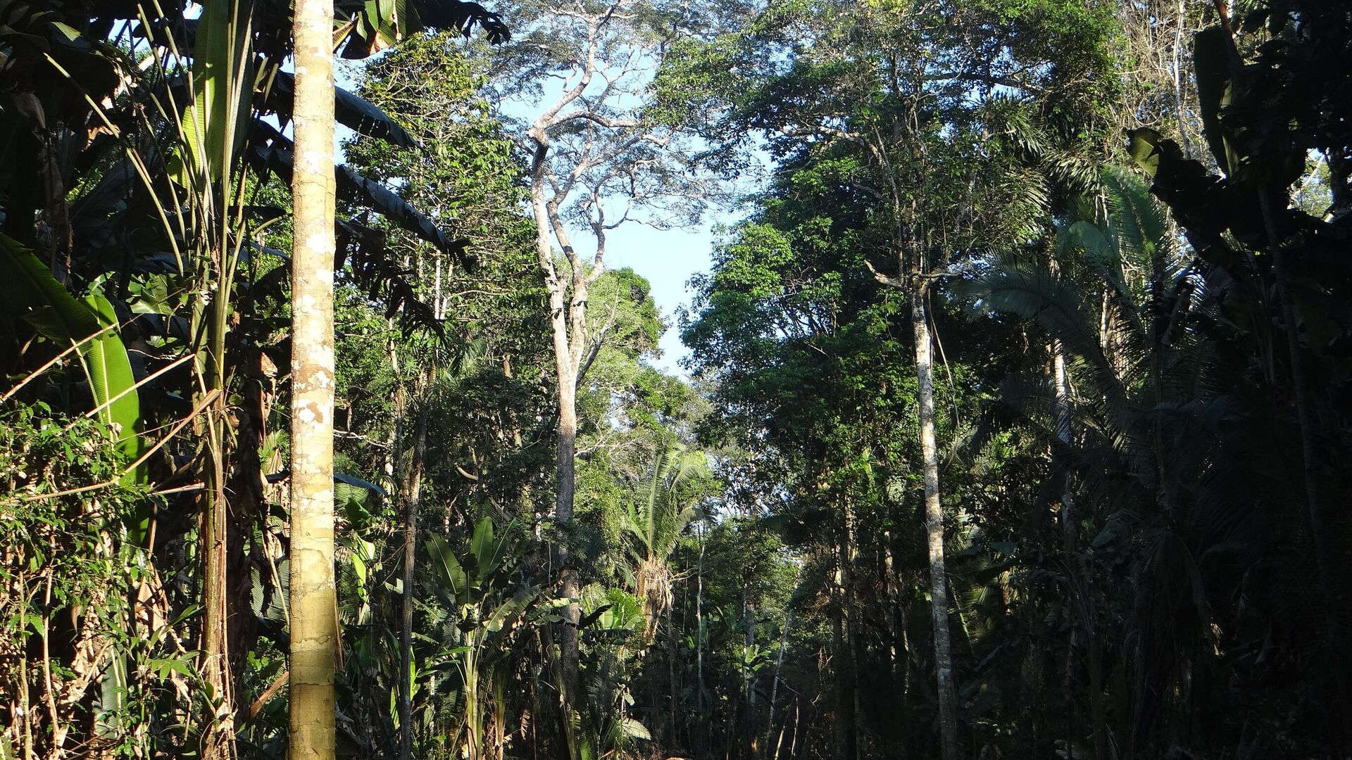 La Amazonia boliviana - Sputnik Mundo, 1920, 27.04.2021