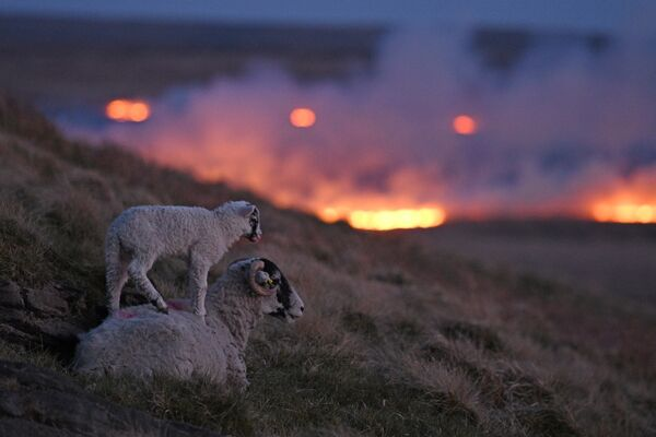 Incendio en un pantáno de Marsden, cerca de Huddersfield, en el norte de Inglaterra. - Sputnik Mundo