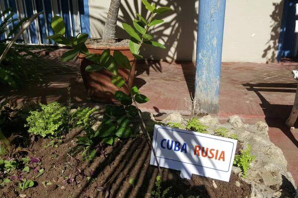 Rusos y cubanos siembran el Jardín de la Memoria en Santiago de Cuba, en honor a los caídos en la Gran Guerra Patria - Sputnik Mundo