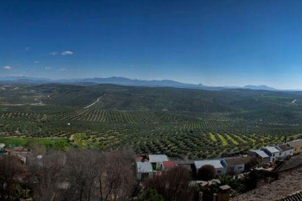 La vista de olivar desde Arjona - Sputnik Mundo